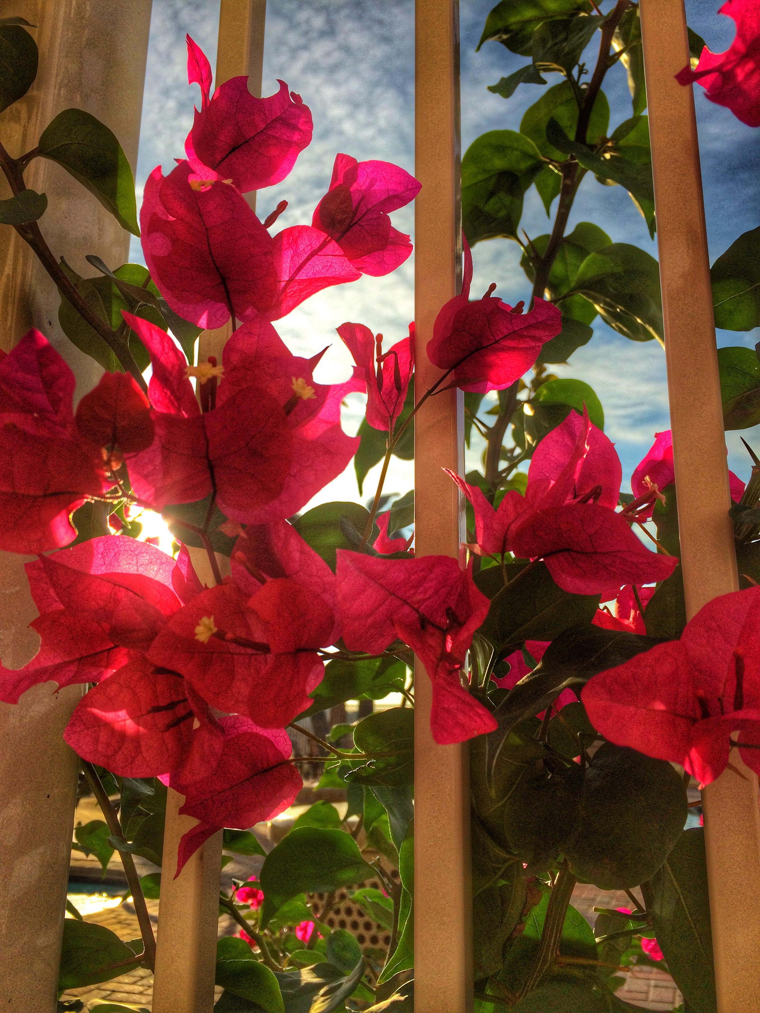 Multifamily Paradise Living at Lantana Gardens in Odessa - Water ...