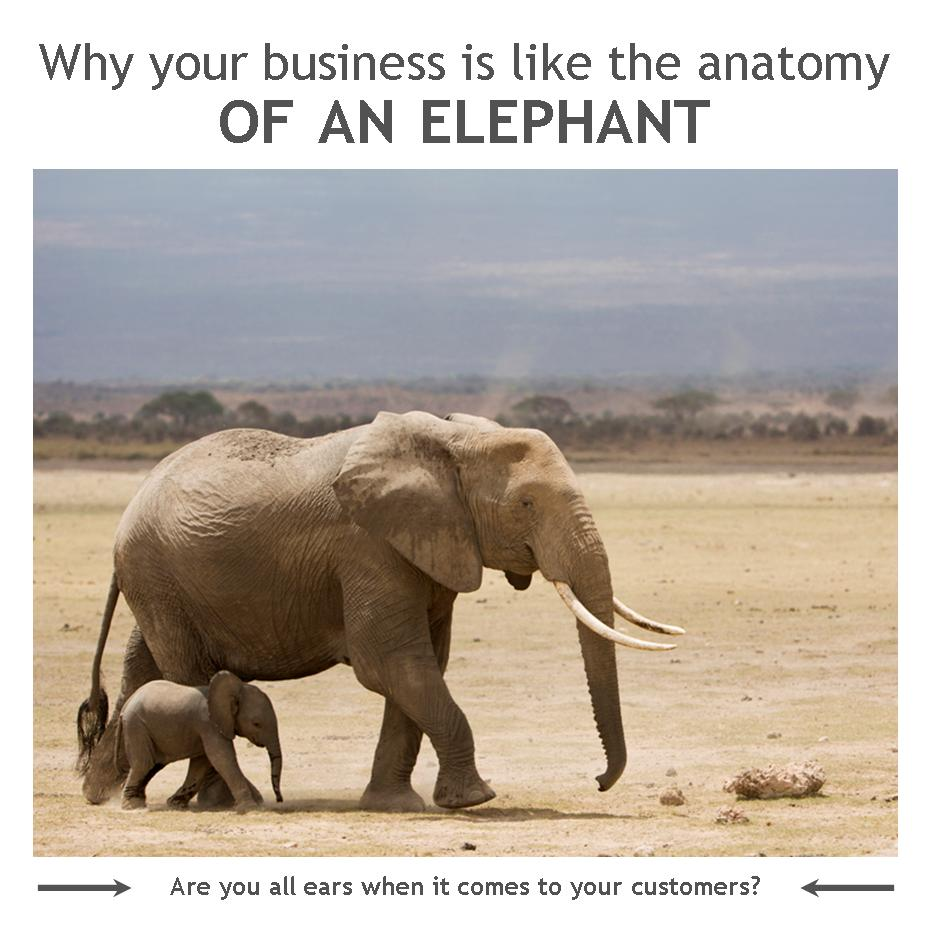 Why Your Business Is Like the Anatomy of an Elephant - Water Works ...
